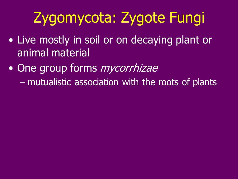 Zygomycota: Zygote Fungi Live mostly in soil or on decaying plant or animal material One group forms mycorrhizae –mutualistic association with the roots of plants