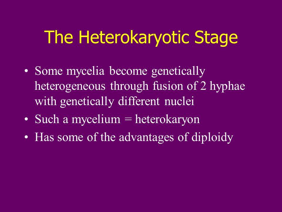Diversity of Fungi More than 100,000 species are known Four phyla –Chytridiomycota –Zygomycota –Ascomycota –Basidiomycota