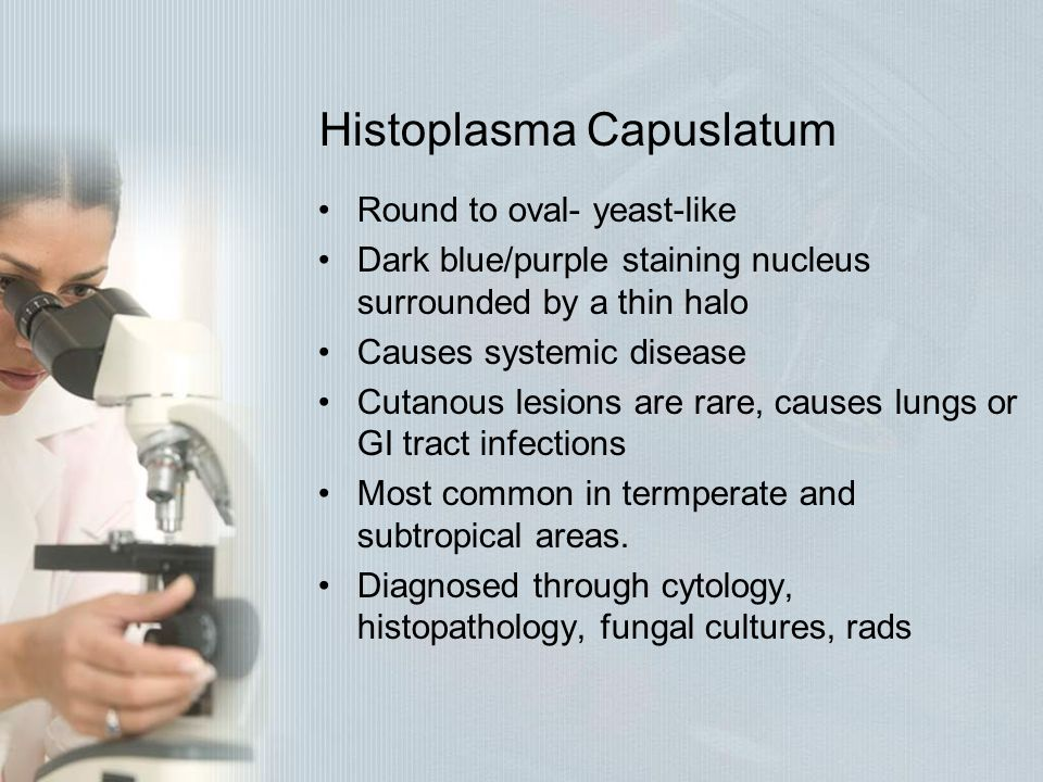 Histoplasma Capuslatum Round to oval- yeast-like Dark blue/purple staining nucleus surrounded by a thin halo Causes systemic disease Cutanous lesions