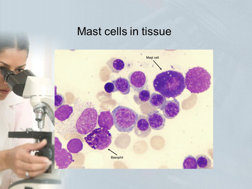 Mast cells in tissue