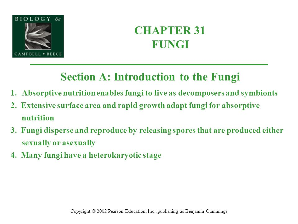 CHAPTER 31 FUNGI Copyright © 2002 Pearson Education, Inc., publishing as Benjamin Cummings Section A: Introduction to the Fungi 1.Absorptive nutrition