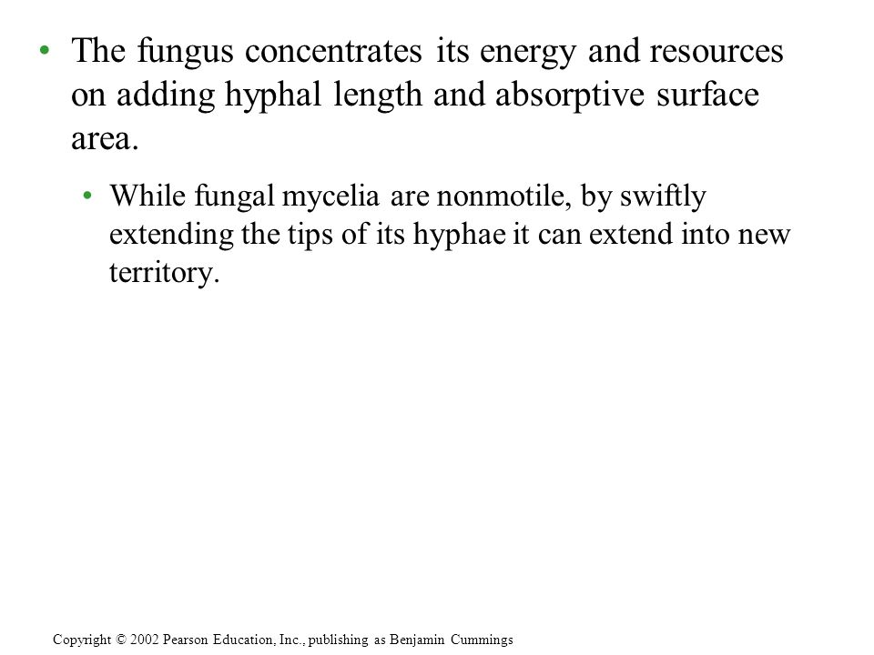 The fungus concentrates its energy and resources on adding hyphal length and absorptive surface area. While fungal mycelia are nonmotile, by swiftly e