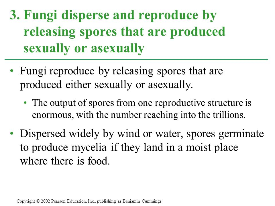 Fungi reproduce by releasing spores that are produced either sexually or asexually. The output of spores from one reproductive structure is enormous,