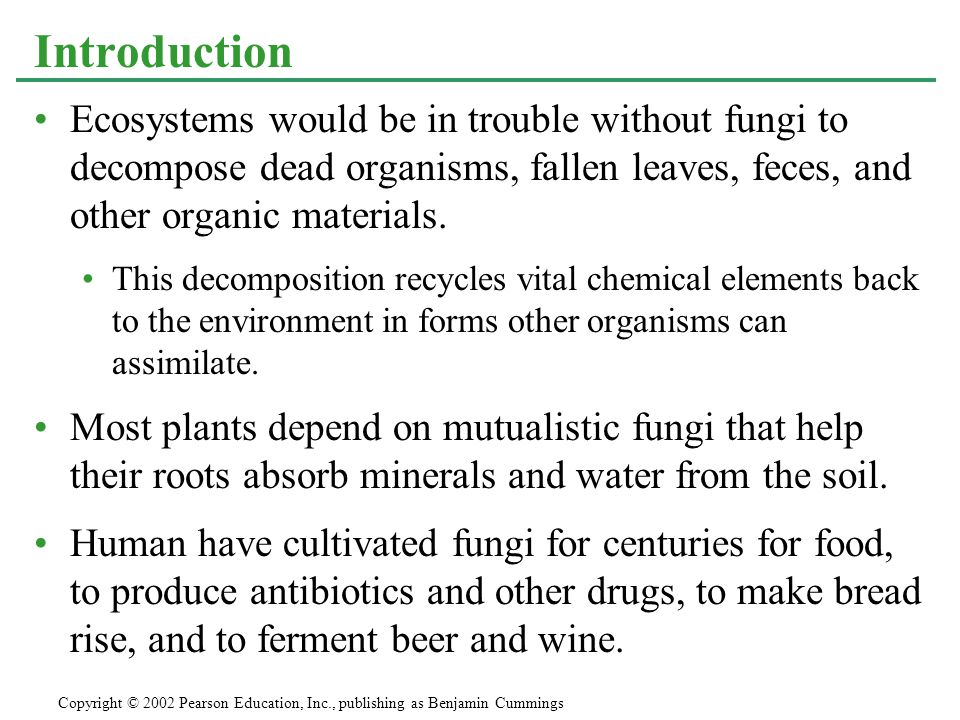 Yeast are even more important in food production.