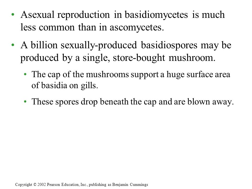 Asexual reproduction in basidiomycetes is much less common than in ascomycetes. A billion sexually-produced basidiospores may be produced by a single,