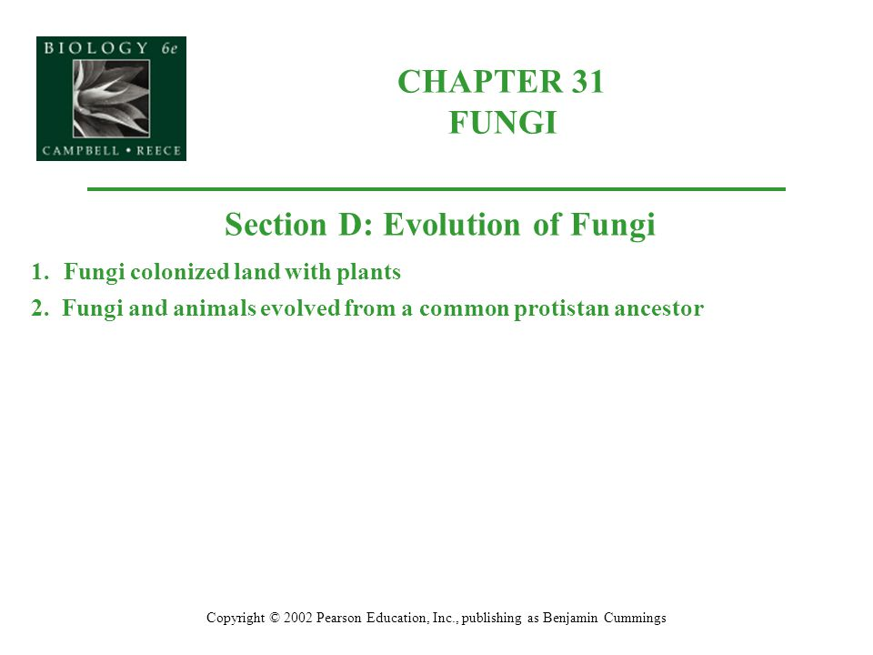 CHAPTER 31 FUNGI Copyright © 2002 Pearson Education, Inc., publishing as Benjamin Cummings Section D: Evolution of Fungi 1.Fungi colonized land with p