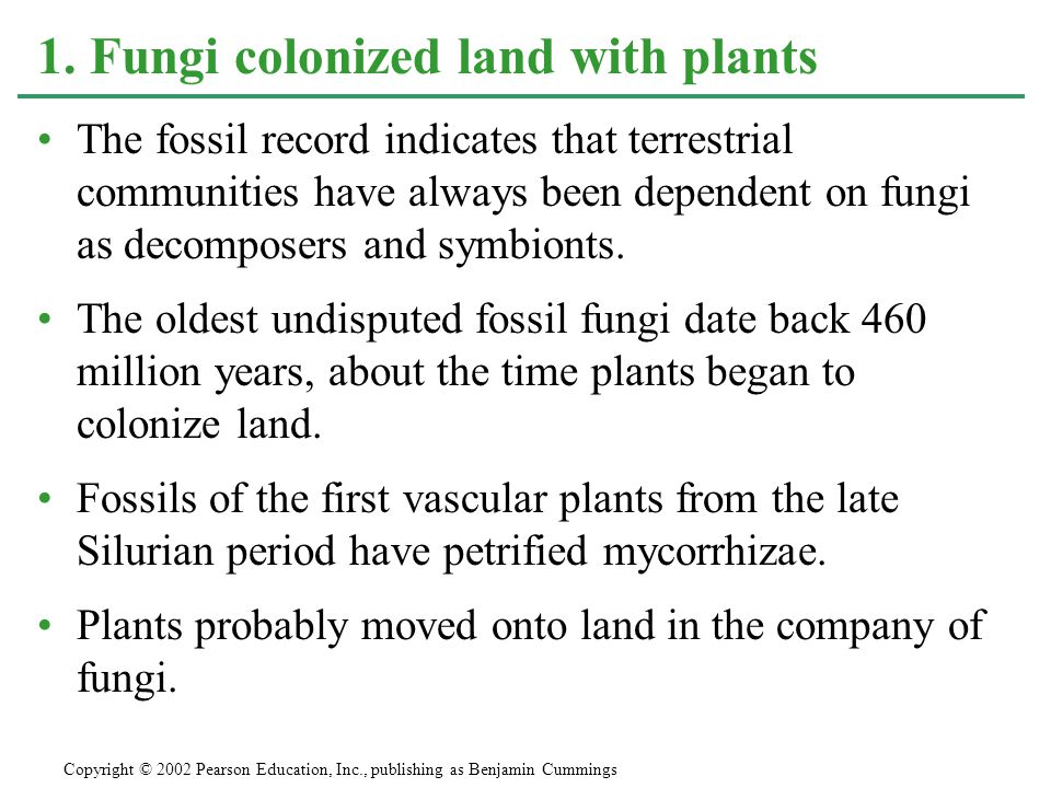The fossil record indicates that terrestrial communities have always been dependent on fungi as decomposers and symbionts. The oldest undisputed fossi