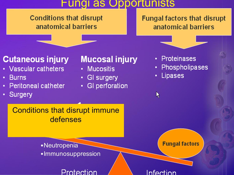 Catheters & Candidemia Non-neutropenic –#1 source.