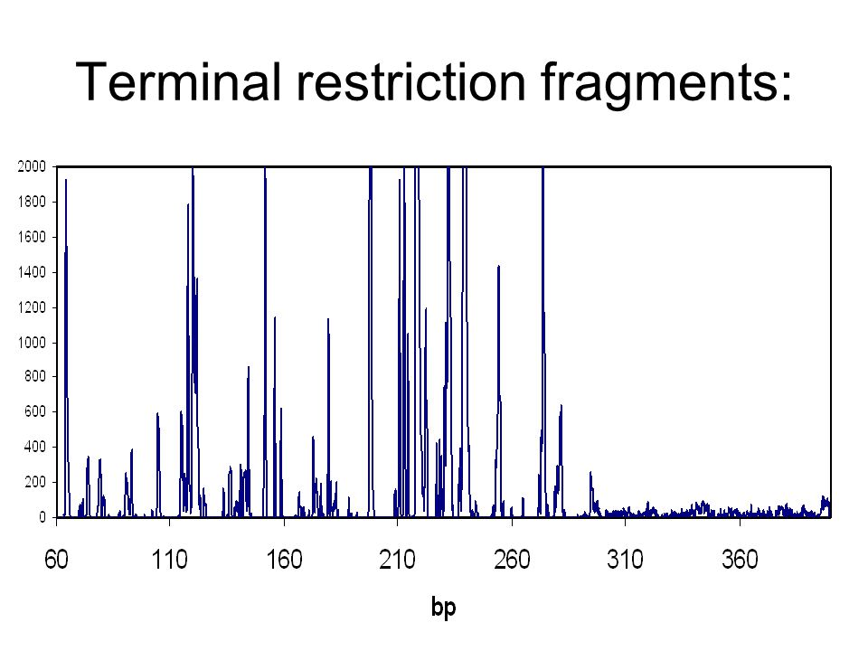 Terminal restriction fragments: