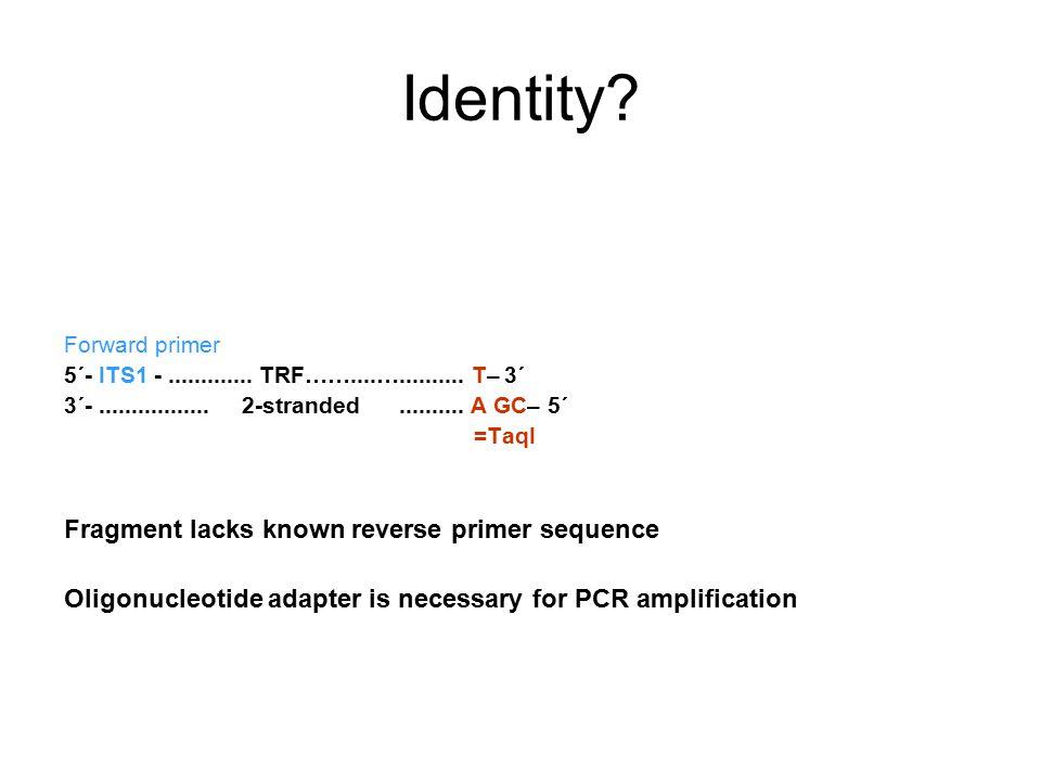 Identity? Forward primer 5´- ITS1 -............. TRF……....….......... T– 3´ 3´-................. 2-stranded.......... A GC– 5´ =TaqI Fragment lacks kn