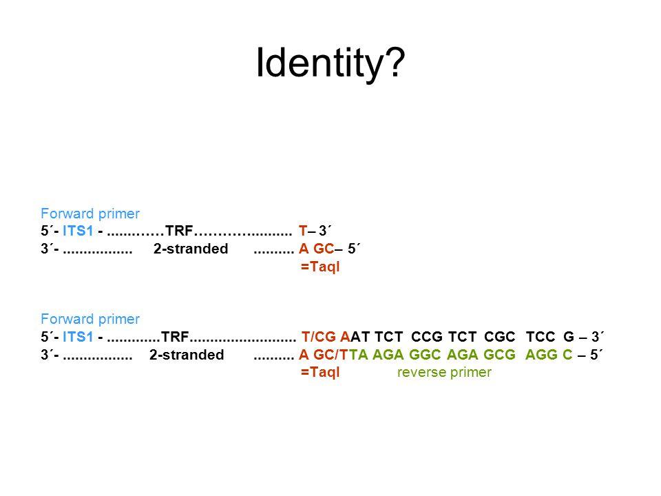 Identity? Forward primer 5´- ITS1 -.......……TRF………….......... T– 3´ 3´-................. 2-stranded.......... A GC– 5´ =TaqI Forward primer 5´- ITS1 -