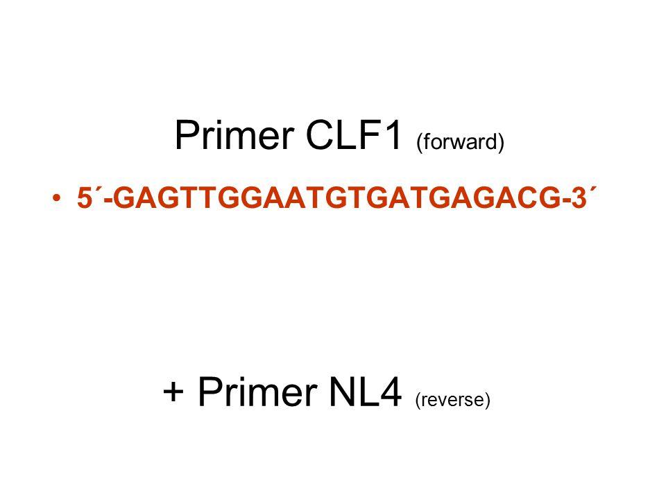 Primer CLF1 (forward) 5´-GAGTTGGAATGTGATGAGACG-3´ + Primer NL4 (reverse)