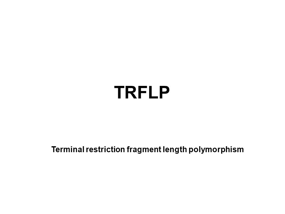 TRFLP Terminal restriction fragment length polymorphism