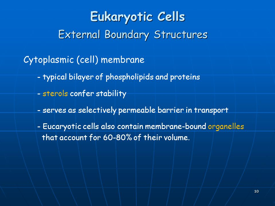 10 Eukaryotic Cells External Boundary Structures Cytoplasmic (cell) membrane - typical bilayer of phospholipids and proteins - sterols confer stability - serves as selectively permeable barrier in transport - Eucaryotic cells also contain membrane-bound organelles that account for 60-80% of their volume.