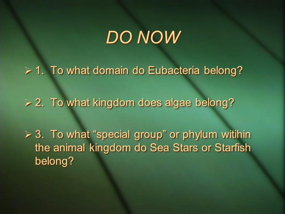 DO NOW  1. To what domain do Eubacteria belong.  2.