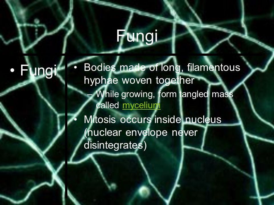 Assessment  Summarize how fungi are classified  Describe the distinctive characteristics of the three phyla of fungi  Describe the structure of the mushroom  Summarize how fungi are classified  Describe the distinctive characteristics of the three phyla of fungi  Describe the structure of the mushroom