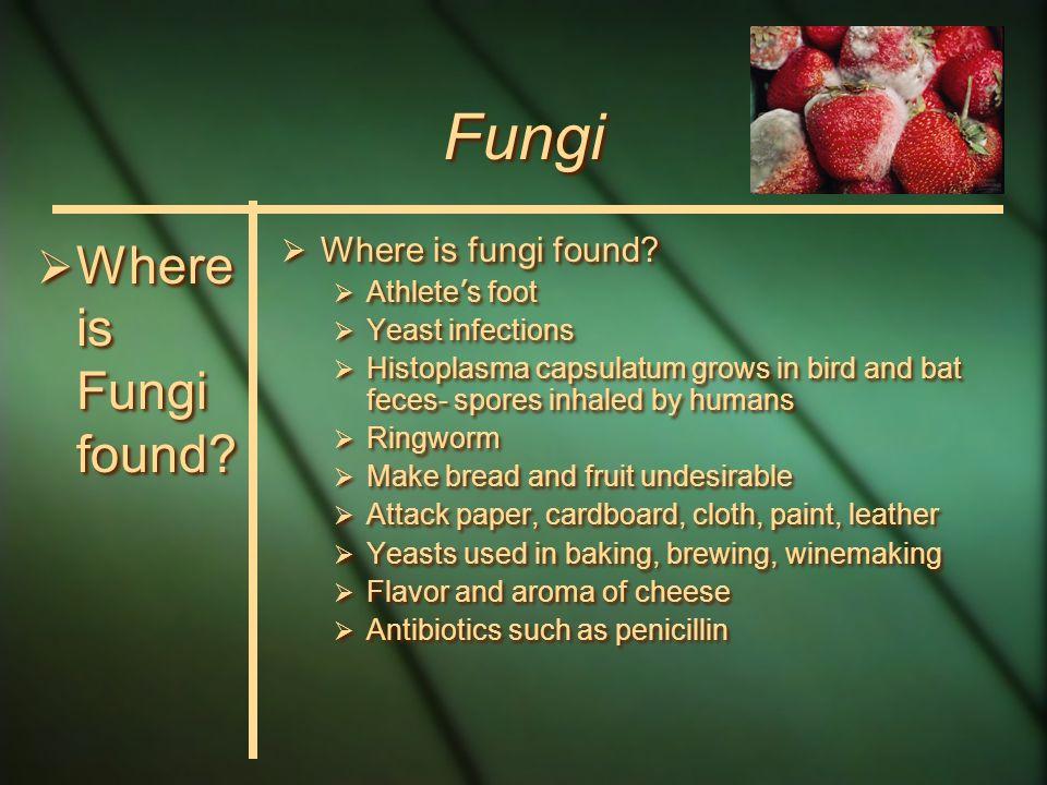 Fungi  Where is Fungi found.  Where is fungi found.