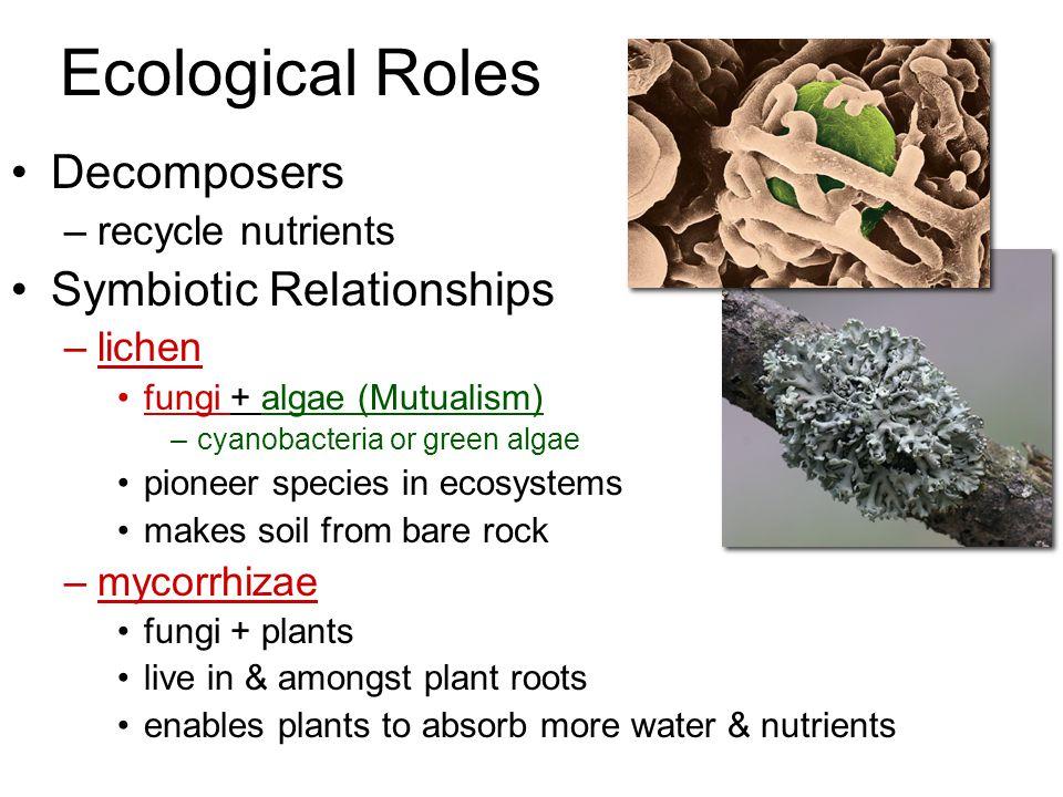 Imperfect Fungi Around 25,000 additional fungus species are grouped in this phylum. Members include Trichophyton (Athlete's foot), Penicillium notatum