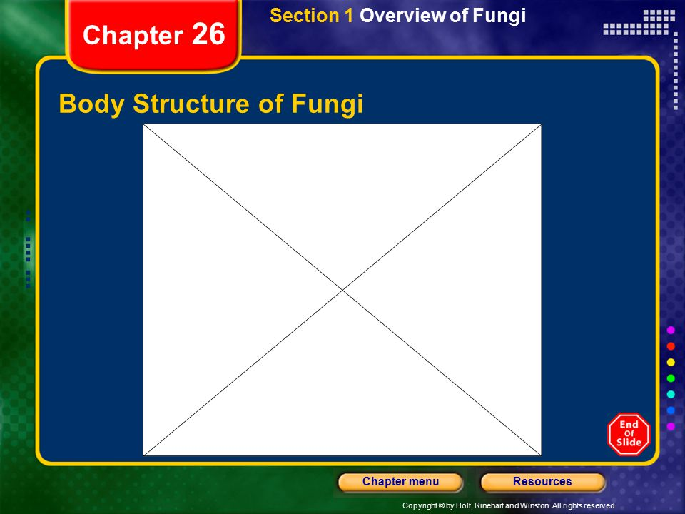 Copyright © by Holt, Rinehart and Winston. All rights reserved. ResourcesChapter menu Chapter 26 Body Structure of Fungi Section 1 Overview of Fungi