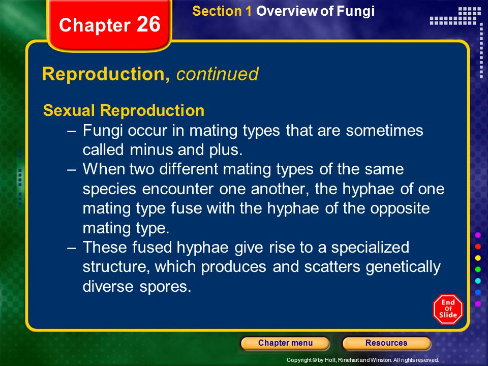 Copyright © by Holt, Rinehart and Winston. All rights reserved. ResourcesChapter menu Section 1 Overview of Fungi Chapter 26 Reproduction, continued S