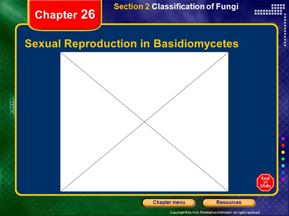 Copyright © by Holt, Rinehart and Winston. All rights reserved. ResourcesChapter menu Chapter 26 Sexual Reproduction in Basidiomycetes Section 2 Class
