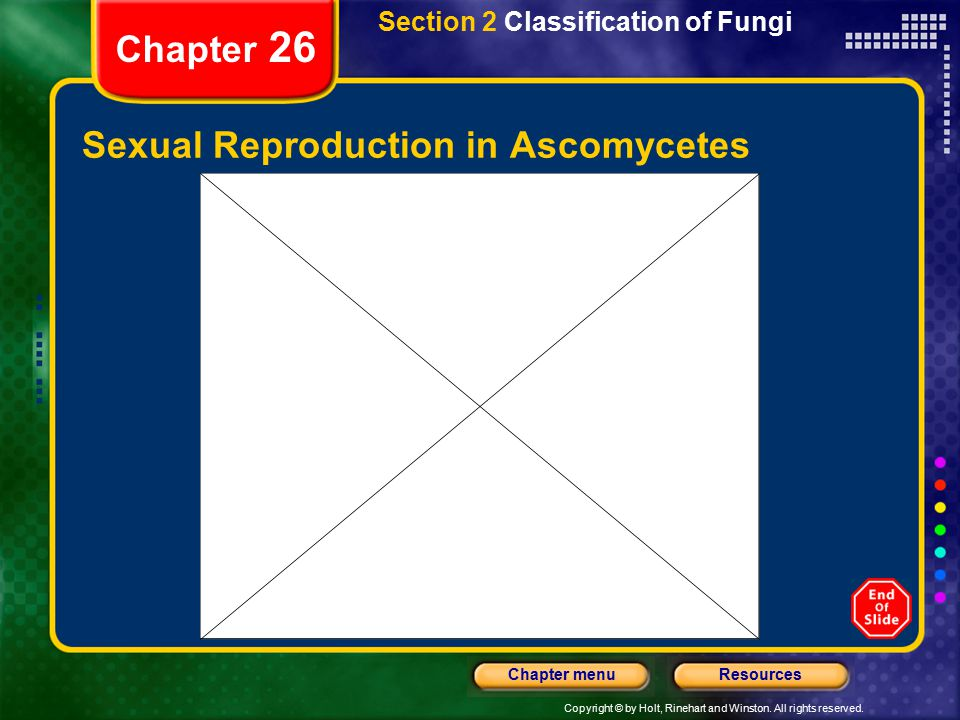 Copyright © by Holt, Rinehart and Winston. All rights reserved. ResourcesChapter menu Chapter 26 Sexual Reproduction in Ascomycetes Section 2 Classifi