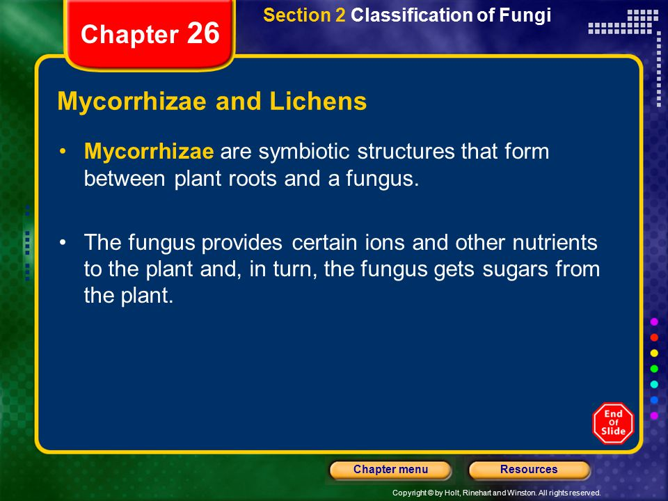 Copyright © by Holt, Rinehart and Winston. All rights reserved. ResourcesChapter menu Section 2 Classification of Fungi Chapter 26 Mycorrhizae and Lic