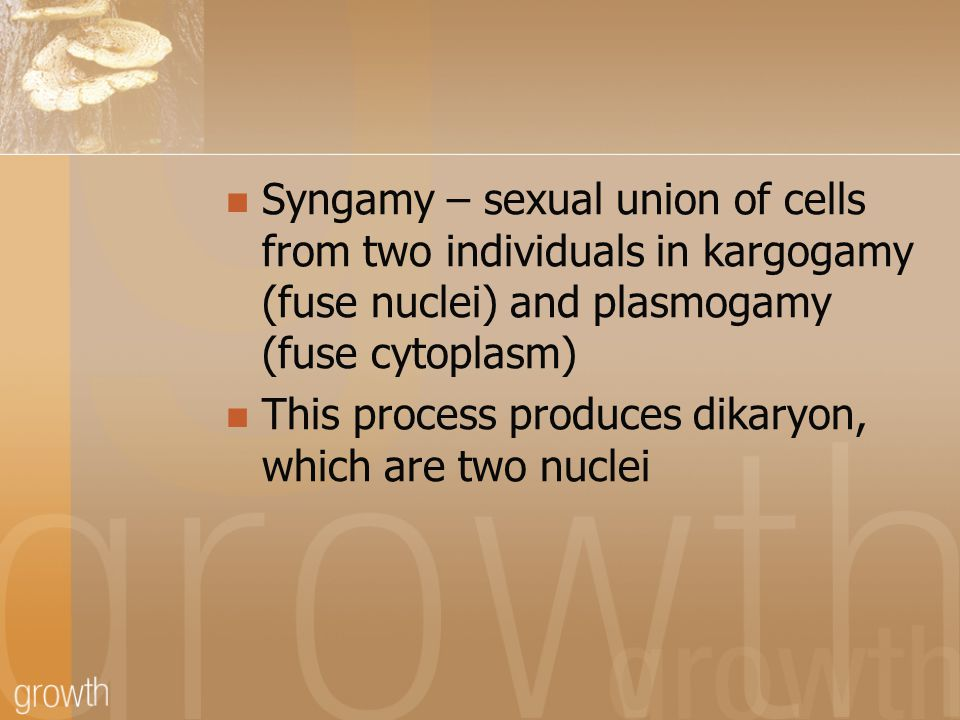 Syngamy – sexual union of cells from two individuals in kargogamy (fuse nuclei) and plasmogamy (fuse cytoplasm) This process produces dikaryon, which are two nuclei