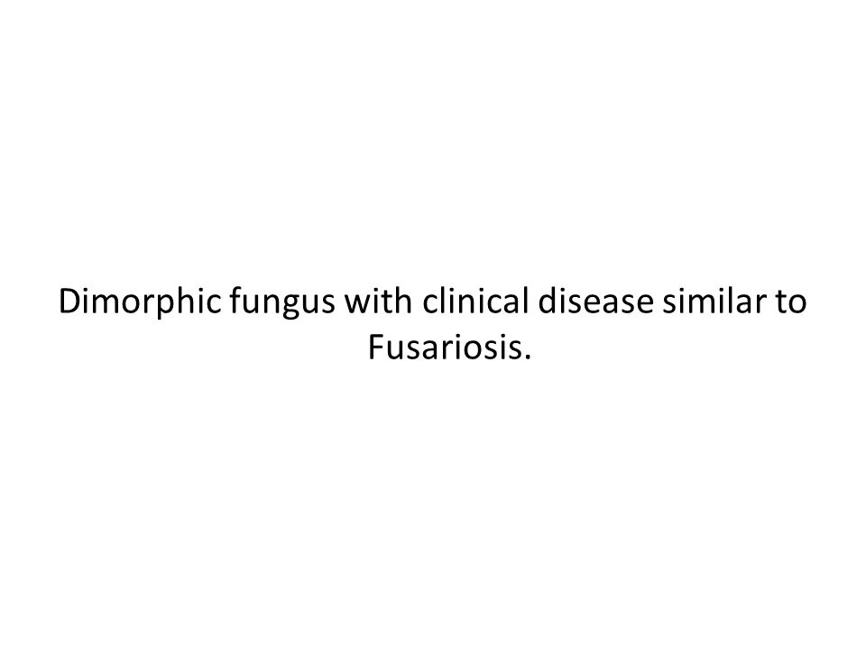 Dimorphic fungus with clinical disease similar to Fusariosis.