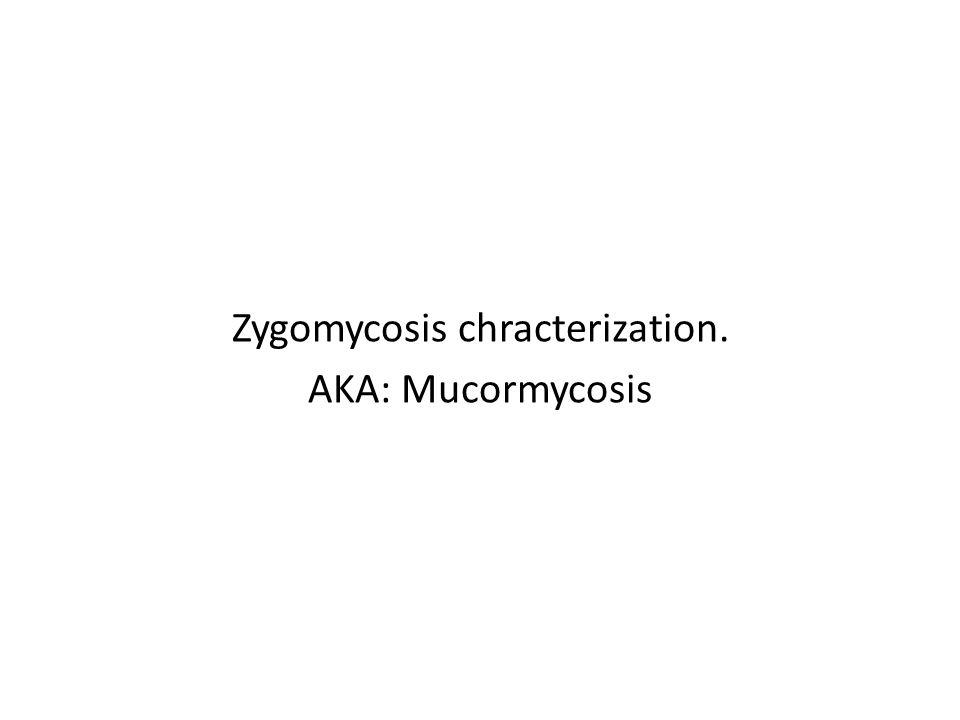 Zygomycosis chracterization. AKA: Mucormycosis