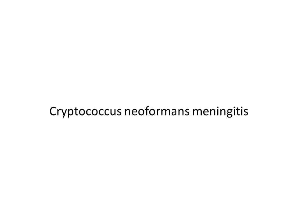 Cryptococcus neoformans meningitis