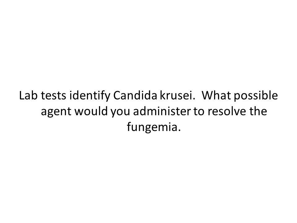 Lab tests identify Candida krusei.