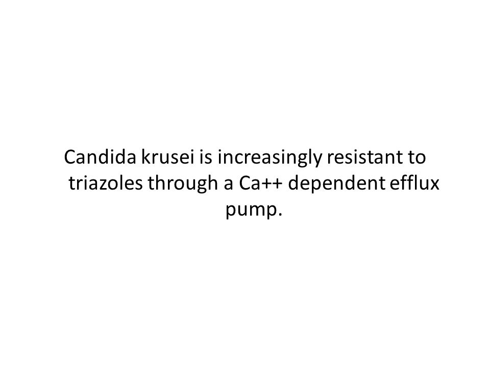 Candida krusei is increasingly resistant to triazoles through a Ca++ dependent efflux pump.