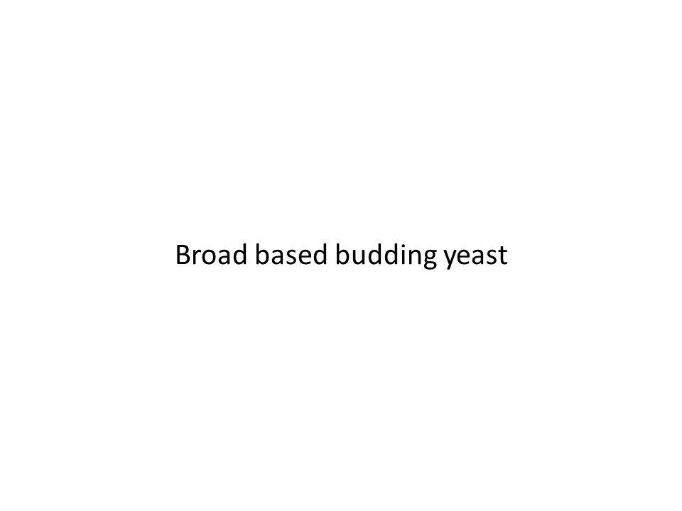Broad based budding yeast