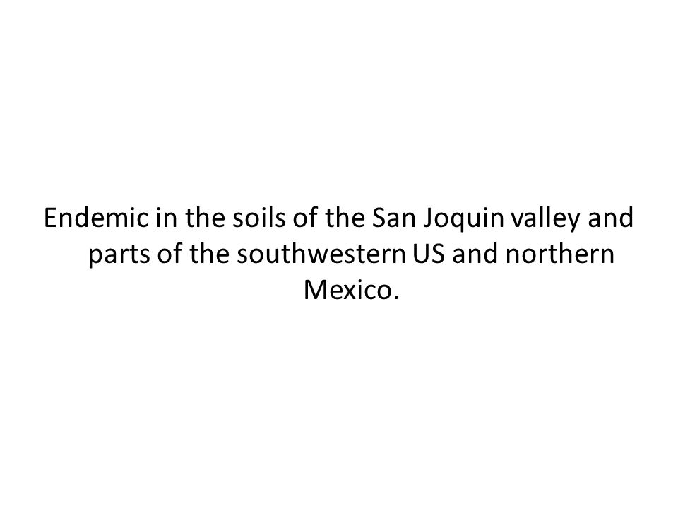 Endemic in the soils of the San Joquin valley and parts of the southwestern US and northern Mexico.