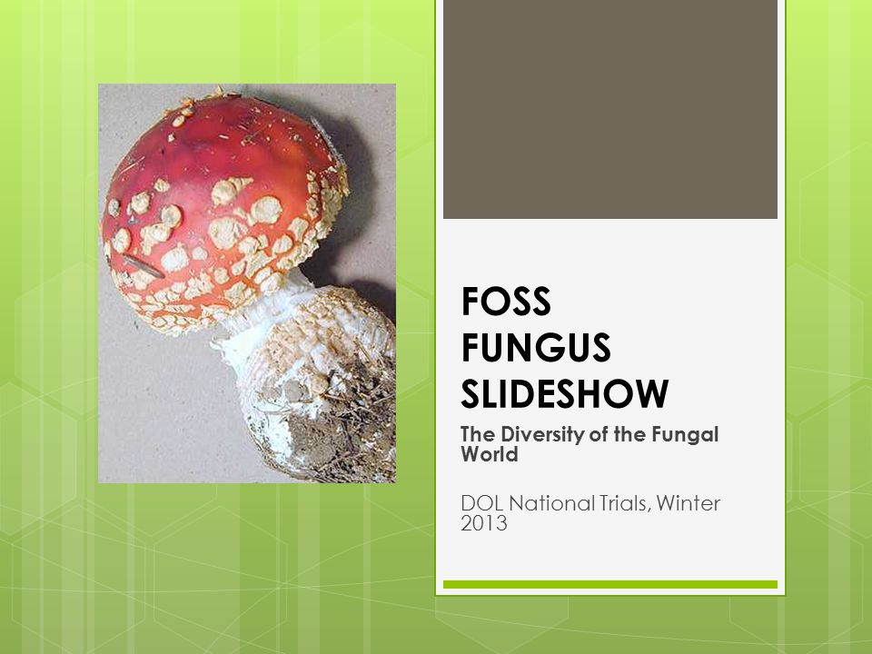 Fungal Diversity  Yeast  Mold  Mushrooms  Mildew  Lichens