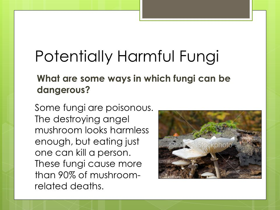 Potentially Harmful Fungi What are some ways in which fungi can be dangerous.