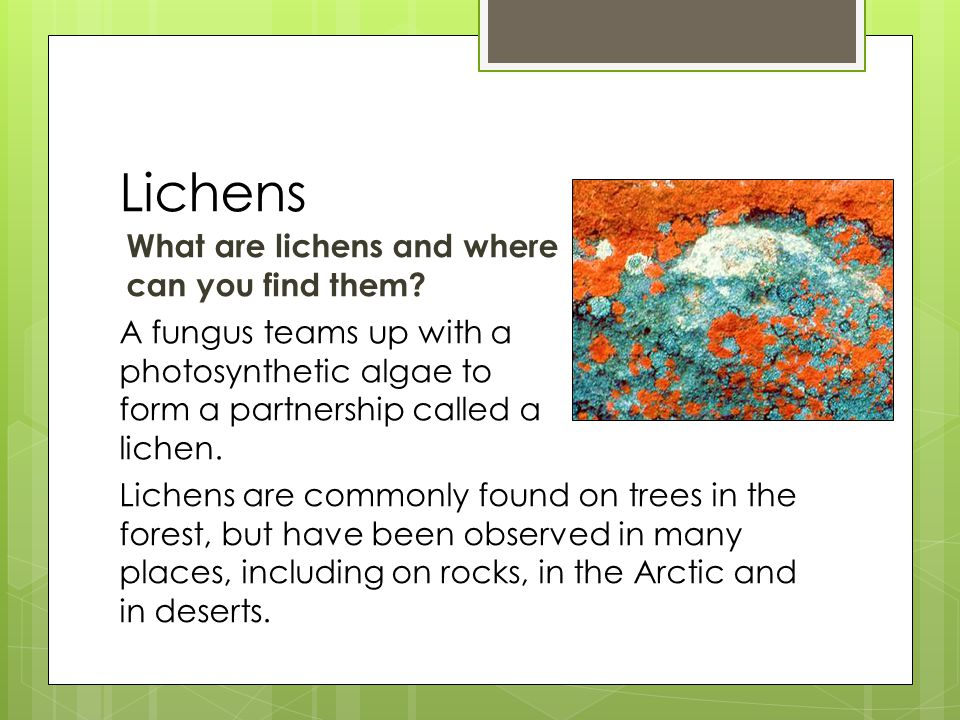 Lichens What are lichens and where can you find them.