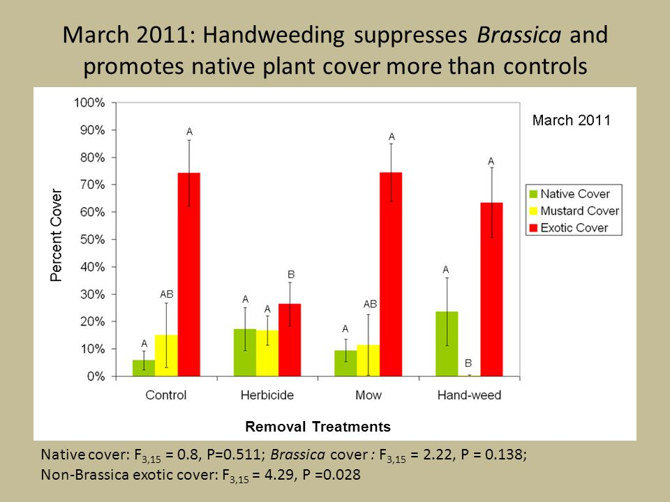 March 2011: Handweeding suppresses Brassica and promotes native plant cover more than controls Native cover: F 3,15 = 0.8, P=0.511; Brassica cover : F 3,15 = 2.22, P = 0.138; Non-Brassica exotic cover: F 3,15 = 4.29, P =0.028 Removal Treatments