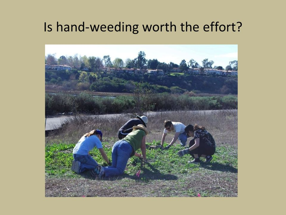 Is hand-weeding worth the effort