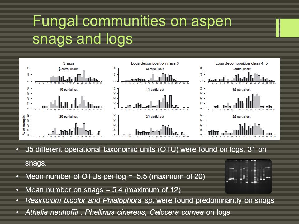 Fungal communities on aspen snags and logs 35 different operational taxonomic units (OTU) were found on logs, 31 on snags. Mean number of OTUs per log