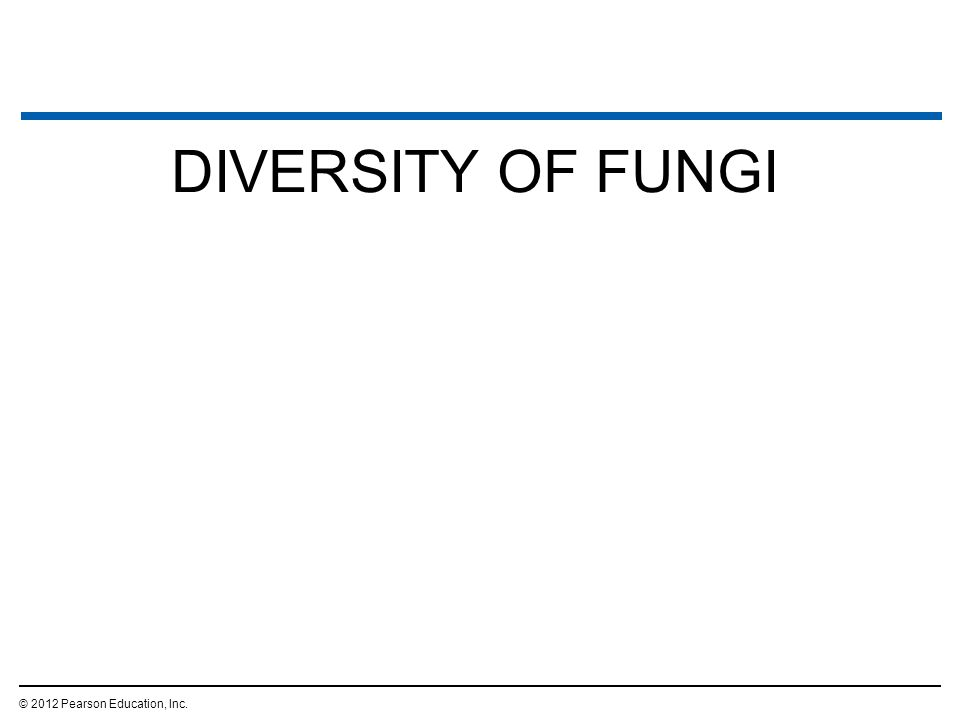17.14 Fungi absorb food after digesting it outside their bodies  Fungi –are absorptive heterotrophic eukaryotes, –secrete powerful enzymes to digest their food externally, and –acquire their nutrients by absorption.