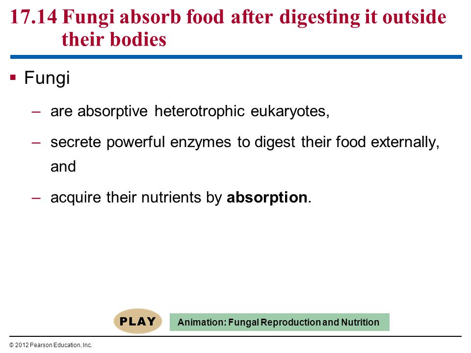  Fungi have many practical uses for humans.–We eat mushrooms and cheeses modified by fungi.
