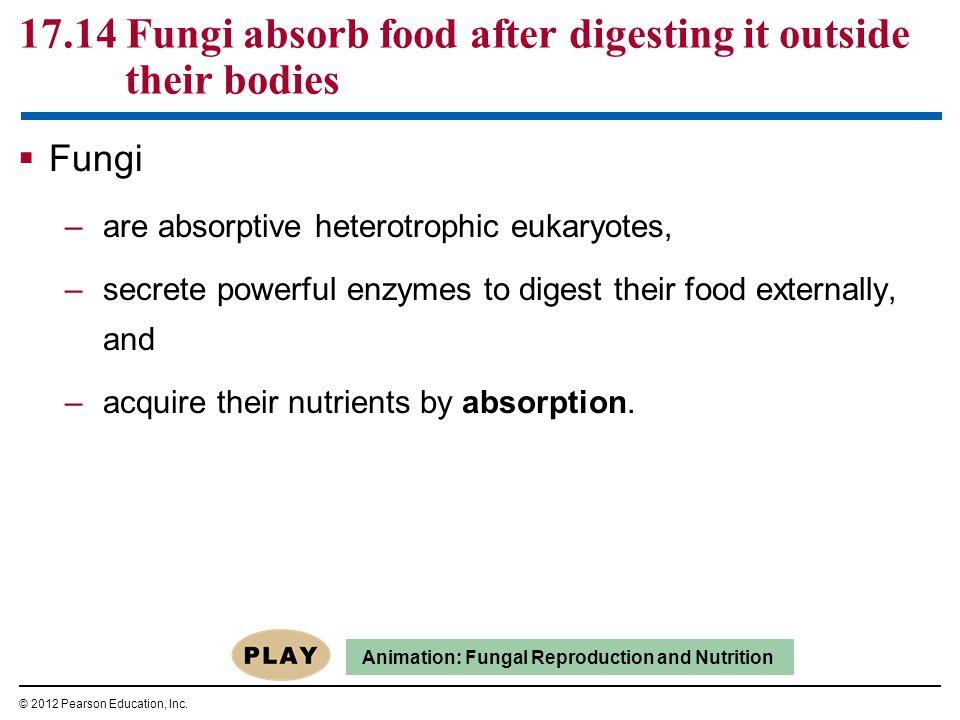 Figure 17.16D Ascomycetes Edible morelsCup fungus