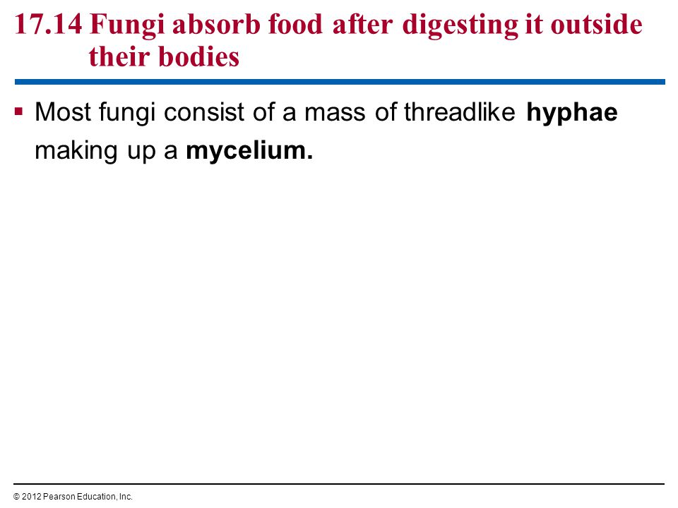 17.14 Fungi absorb food after digesting it outside their bodies  Most fungi consist of a mass of threadlike hyphae making up a mycelium. © 2012 Pears
