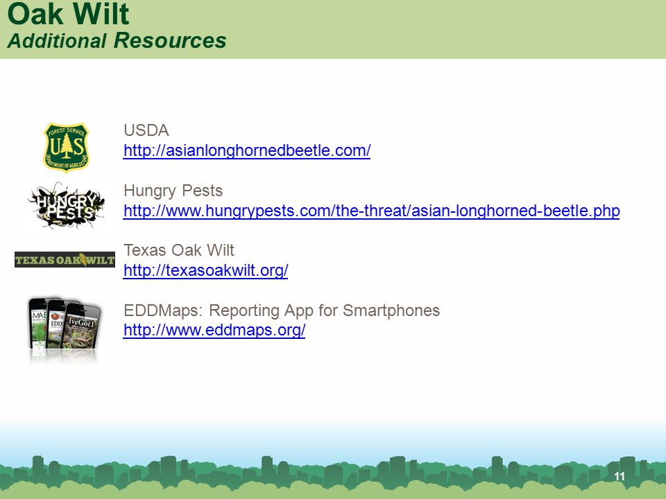 11 Oak Wilt Additional Resources USDA http://asianlonghornedbeetle.com/ Hungry Pests http://www.hungrypests.com/the-threat/asian-longhorned-beetle.php