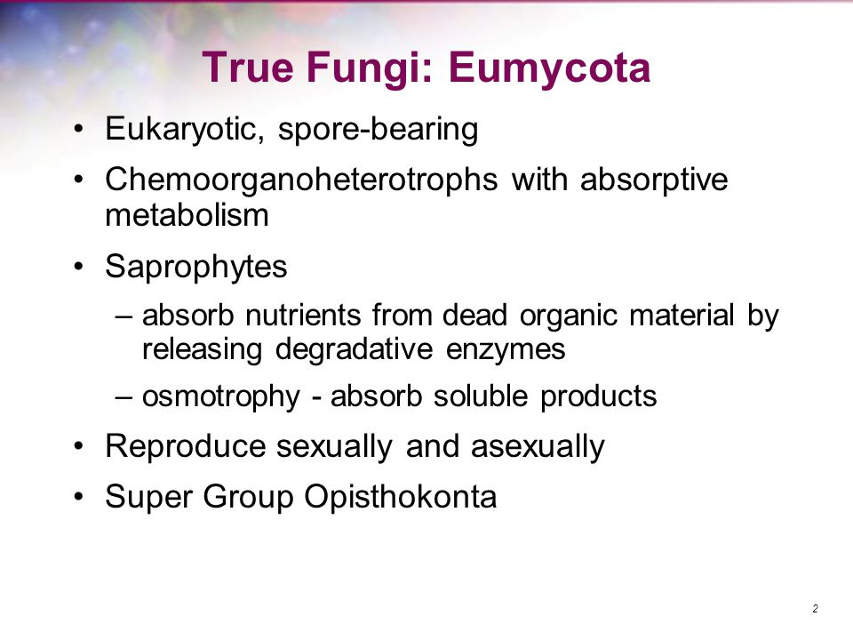 Terminology Mycology – study of fungi Mycologists – scientists who study fungi Mycoses – diseases caused by fungi Mycotoxicology – study of fungal toxins and their effects 3