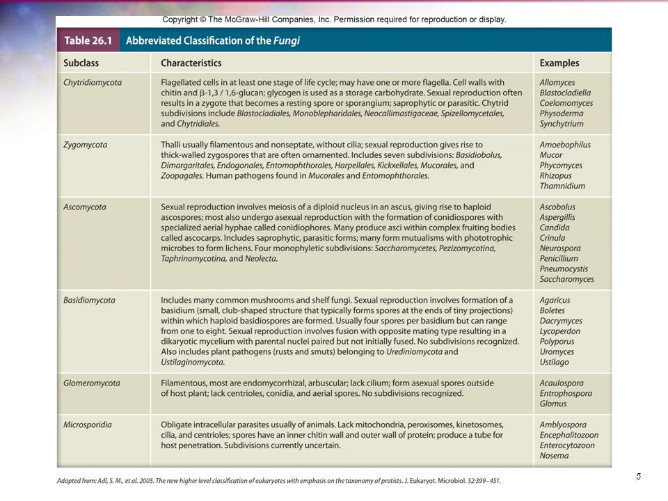 Airborne Diseases Histoplasmosis – common lung disease –caused by Histoplasma capsulatum var.