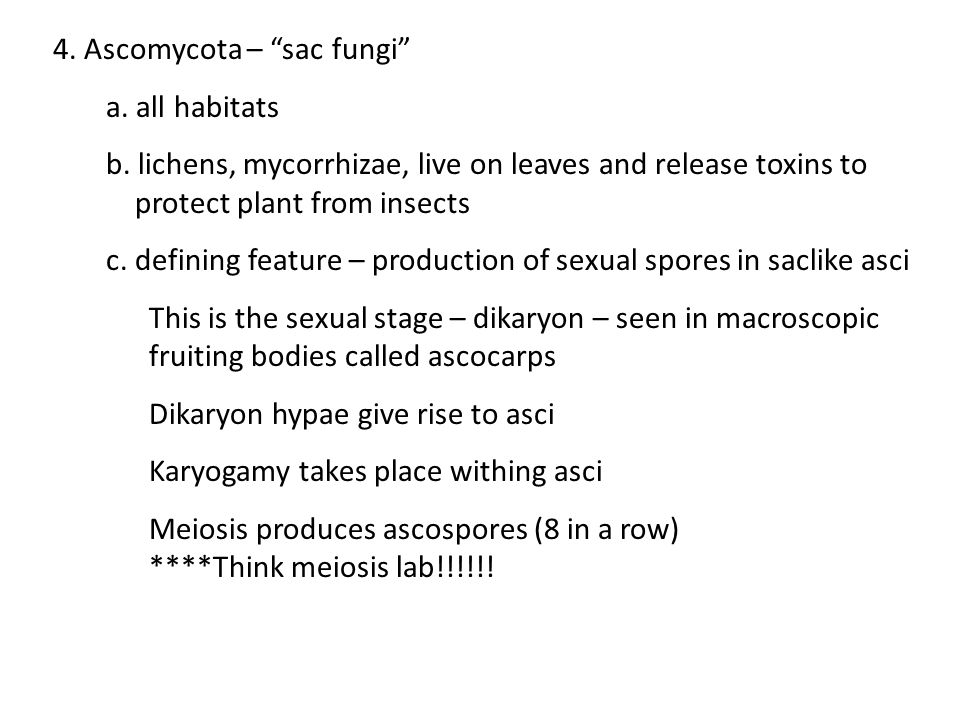 """4. Ascomycota – """"sac fungi"""" a. all habitats b. lichens, mycorrhizae, live on leaves and release toxins to protect plant from insects c. defining featu"""