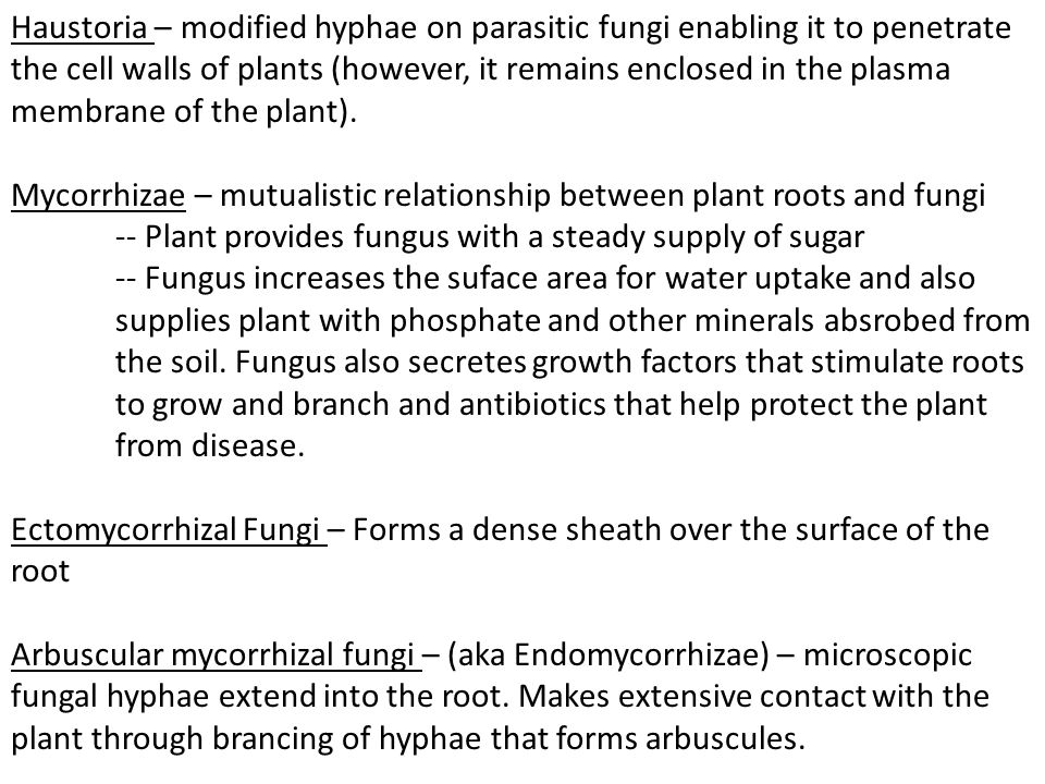 Haustoria – modified hyphae on parasitic fungi enabling it to penetrate the cell walls of plants (however, it remains enclosed in the plasma membrane
